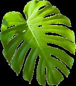 parallax-planta